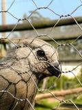 Pájaro 1 de Grey Go-Away Fotografía de archivo