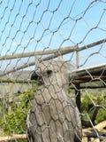 Pájaro 2 de Grey Go-Away Imagenes de archivo