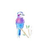 Pájaro de la acuarela del ejemplo en la rama imagen de archivo