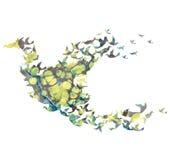 Pájaro de la acuarela del vector Imágenes de archivo libres de regalías