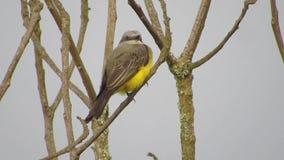 Pájaro de la avenida de la naturaleza almacen de metraje de vídeo