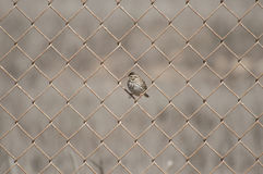 Pájaro de la canción Imágenes de archivo libres de regalías