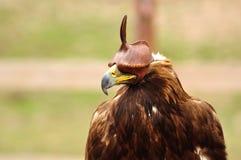 Pájaro de la caza Fotos de archivo libres de regalías