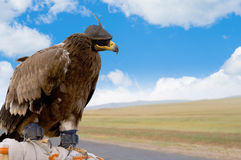 Pájaro de la caza Imágenes de archivo libres de regalías