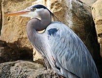 Pájaro de la garza Imagen de archivo libre de regalías