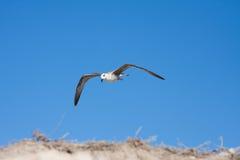 Pájaro de la gaviota Imagenes de archivo