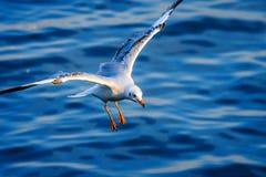 Pájaro de la gaviota Foto de archivo