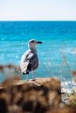 Pájaro de la gaviota Fotos de archivo