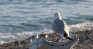 Pájaro de la gaviota que mira hacia fuera sobre un mar que relucir almacen de metraje de vídeo