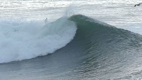 Pájaro de la gaviota que vuela sobre una ola oceánica grande metrajes