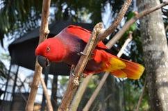 Pájaro de la llama foto de archivo libre de regalías