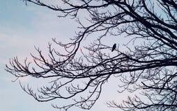 Pájaro de la mañana Fotografía de archivo