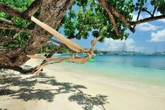 Pájaro de la madera en playa del paraíso Imágenes de archivo libres de regalías