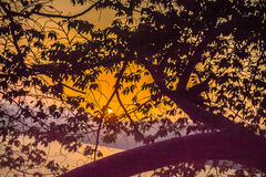 Pájaro de la montaña de la puesta del sol Imágenes de archivo libres de regalías