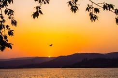 Pájaro de la montaña de la puesta del sol Fotos de archivo