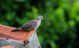 Pájaro de la naturaleza Imagen de archivo libre de regalías