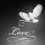 Pájaro de la paloma del amor Imagenes de archivo