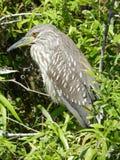 Pájaro de la pesca Foto de archivo