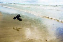 Pájaro de la playa Imágenes de archivo libres de regalías