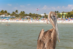Pájaro de la playa Imagen de archivo libre de regalías