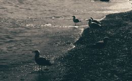 Pájaro de la playa Foto de archivo libre de regalías