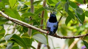 pájaro de la selva tropical en una rama metrajes