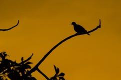 Pájaro de la silueta Fotografía de archivo libre de regalías