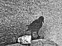 Pájaro de la sombra Fotos de archivo libres de regalías