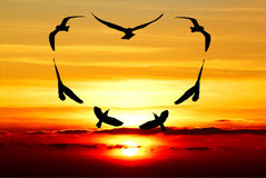 Pájaro de la tarjeta del día de San Valentín Imagenes de archivo