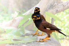 Pájaro de la urraca Fotografía de archivo