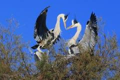 Pájaro de las cigüeñas blancas Imagen de archivo