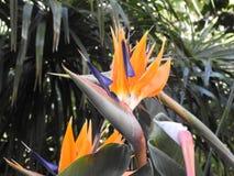 Pájaro de las flores de paraíso imagen de archivo