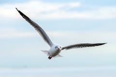 Pájaro de las gaviotas Imágenes de archivo libres de regalías