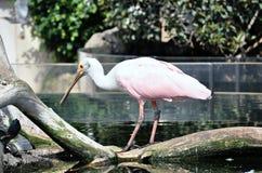 Pájaro de los humedales Imagen de archivo libre de regalías
