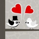 Pájaro de love3 Imagen de archivo