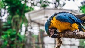 Pájaro de Macao Imagen de archivo