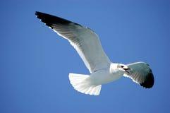 Pájaro de mar Imágenes de archivo libres de regalías