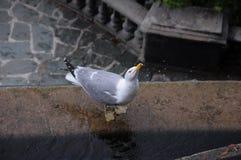 Pájaro de mar. Foto de archivo libre de regalías