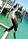 Pájaro de mar en una pera Fotos de archivo
