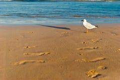 Pájaro de mar en una playa Imagen de archivo