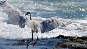 Pájaro de mar en verano fotografía de archivo