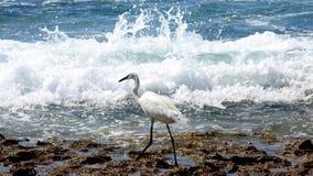 Pájaro de mar en verano imagen de archivo libre de regalías