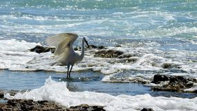 Pájaro de mar en verano fotografía de archivo libre de regalías