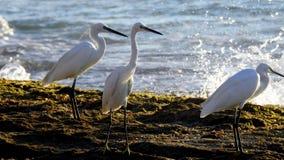 Pájaro de mar en verano imágenes de archivo libres de regalías