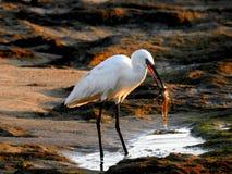Pájaro de mar en verano imagen de archivo