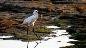 Pájaro de mar en verano fotos de archivo libres de regalías