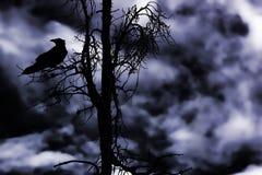 Pájaro de medianoche Fotos de archivo