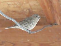 Pájaro de reclinación Foto de archivo libre de regalías