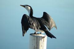 Pájaro de sequía Foto de archivo libre de regalías