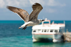 Pájaro de vuelo Fotos de archivo